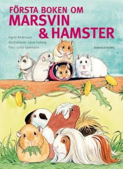 Första boken om marsvin & hamster