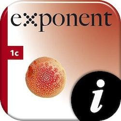Exponent 1c, digital, elevlic, 6 mån