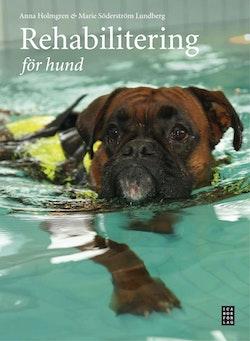 Rehabilitering för hund