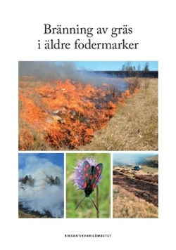 Bränning av gräs i äldre fodermarker