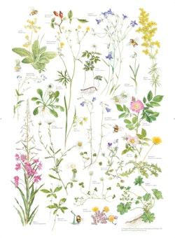 Humlans herbarium 3-pack affisch