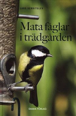 Mata fåglar i trädgården