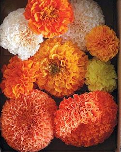 Blommor av papper : Handbok i konsten att skapa vackra, naturtrogna växter