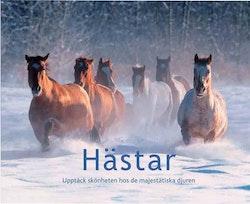 Hästar : upptäck skönheten hos de majestätiska djuren
