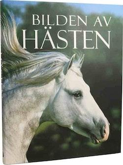 Bilden av hästen