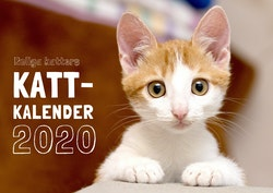 Roliga katters kattkalender 2020