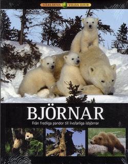 Björnar : från fredliga pandor till livsfarliga björnar